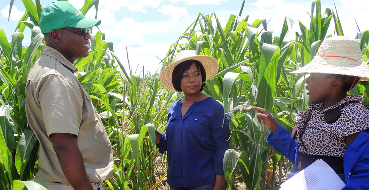 Partnership Brings Hybrid Seeds to small