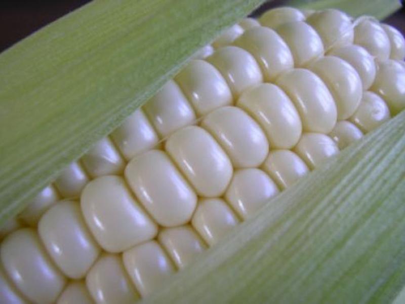 Maize (Hybrid)
